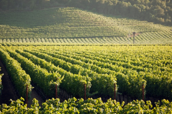 The wine making industry is based in farming and a constant source of new research and development.